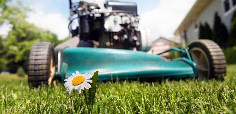 best lawnmower
