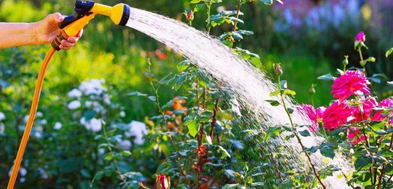 best expandable garden hose
