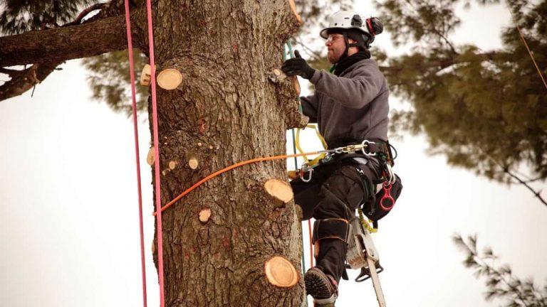 best Tree Climbing Spurs