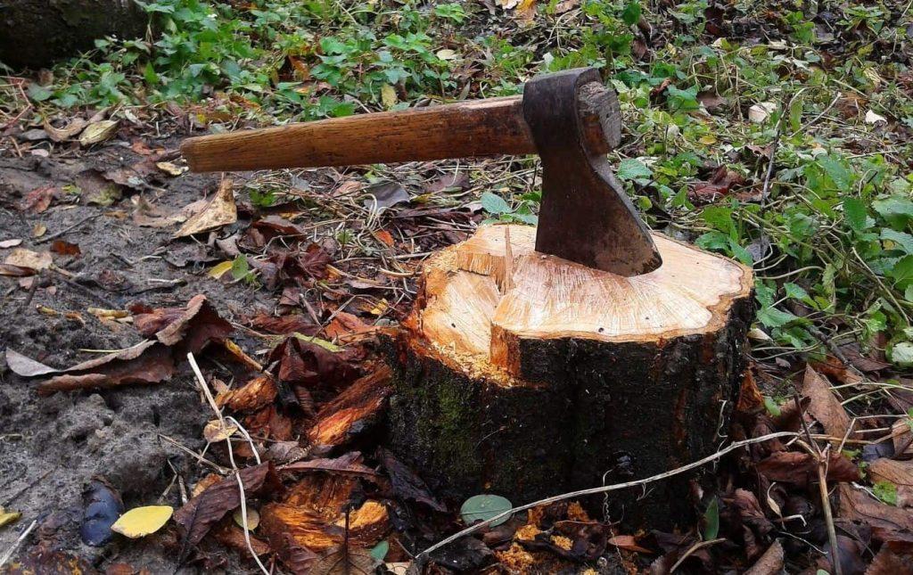 tree stump ax