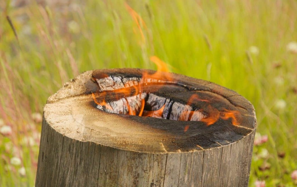 tree stump burn