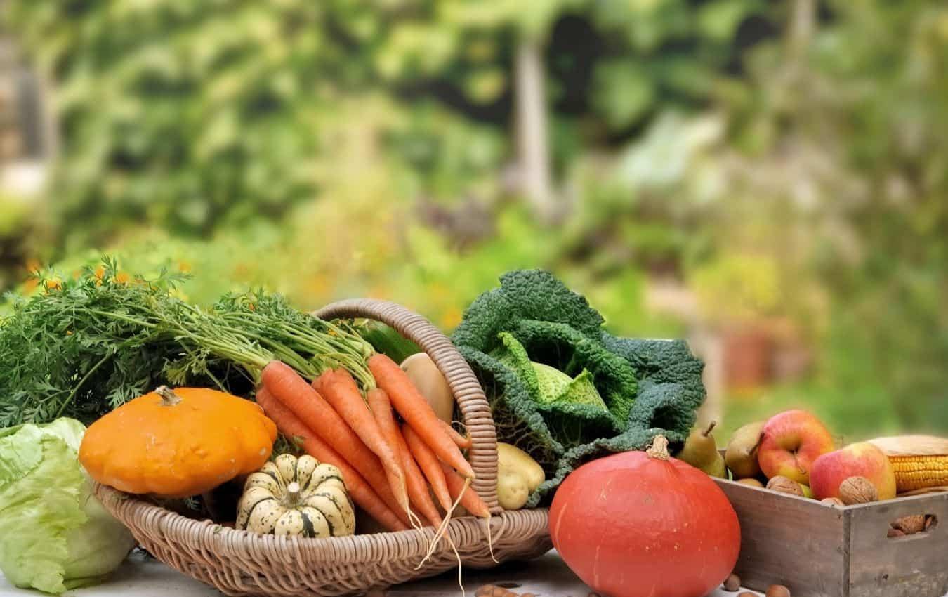 vegetable fruit garden