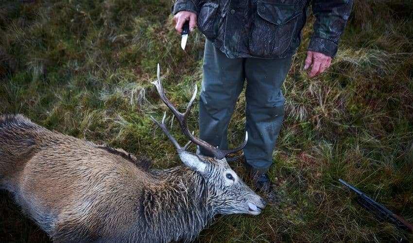 skinning hunter
